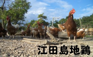 江田島地鶏