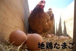 地鶏たまご